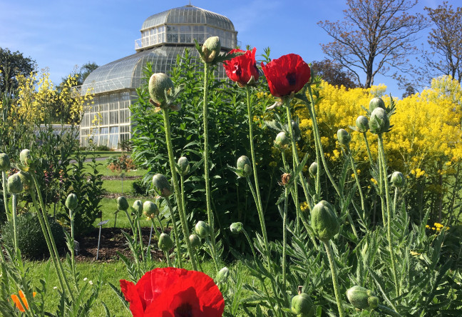 Things to do in County Dublin, Ireland - Botanic Gardens - YourDaysOut