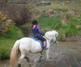 Things to do in County Wexford, Ireland - Lookout Equestrian - YourDaysOut