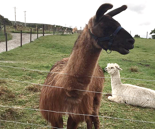 Things to do in County Donegal, Ireland - Errigal View Pet Farm - YourDaysOut