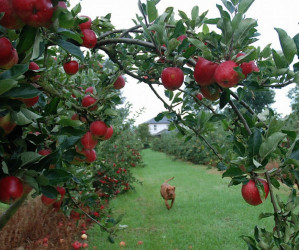 Things to do in County Carlow, Ireland - Gilbert's Orchard - YourDaysOut