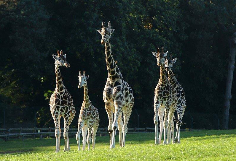 Things to do in County Cork Cobh, Ireland - Fota Wildlife Park - YourDaysOut