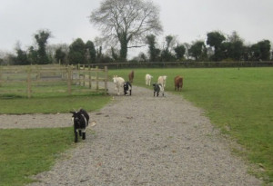 Things to do in County Kildare, Ireland - Karibu Pet Farm - YourDaysOut