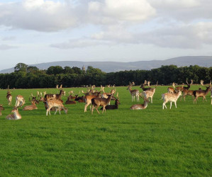 Things to do in County Dublin, Ireland - Phoenix Park - YourDaysOut