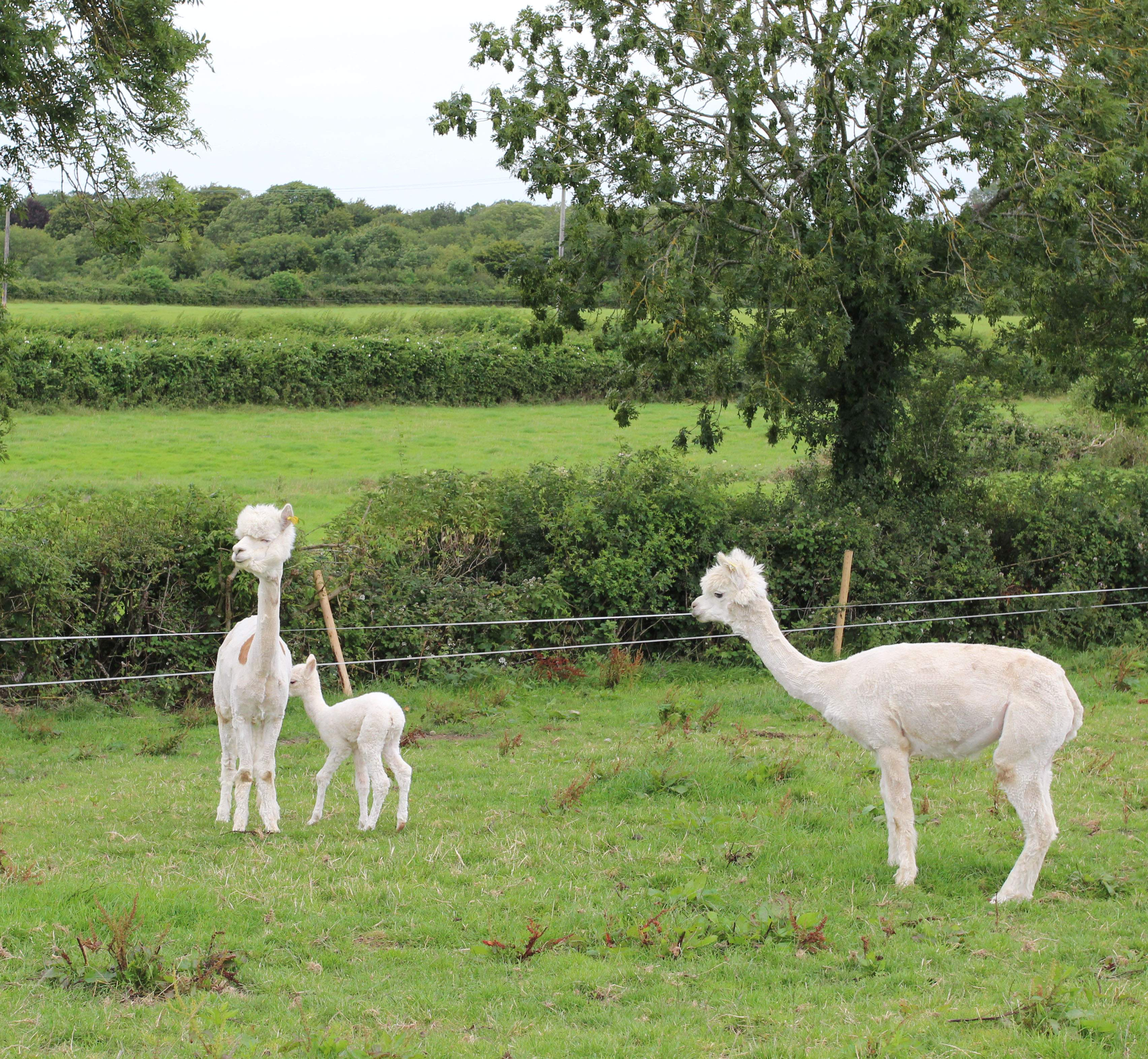 Things to do in County Tipperary, Ireland - Tearaways Pet Farm & Activity Centre - YourDaysOut - Photo 7