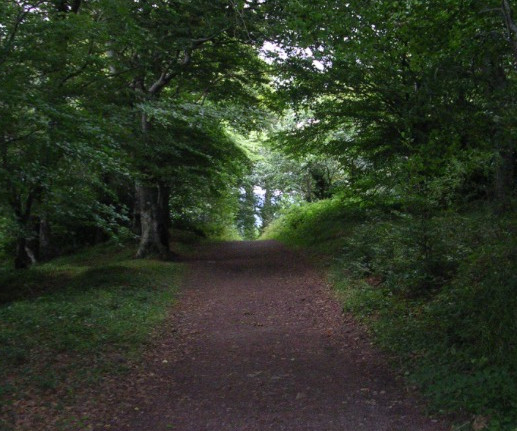 Things to do in County Wicklow, Ireland - Glen of Downs Forest Walk - YourDaysOut